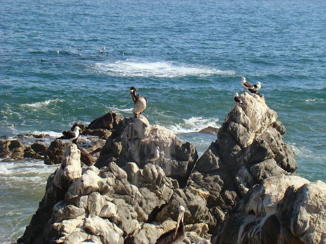 Viña del Mar, Que hacer a donde ir, que visitar en Chile
