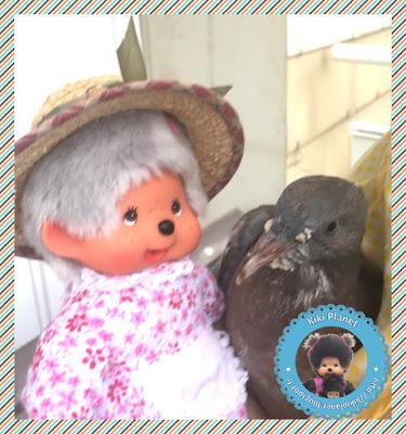 Grand'Ma la Monchhichi et Colombine le bébé pigeon - pigeonneau - oisillon -oiseau -gavage