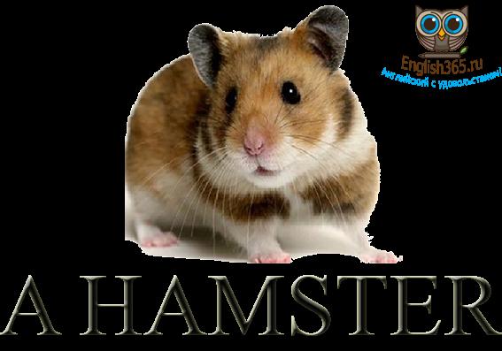 Карточки для детей, A hamster