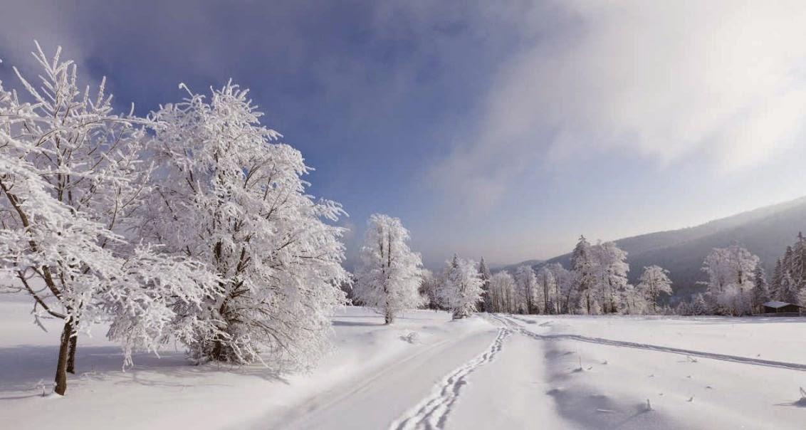 Nieve y biologia
