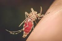 https://www.economicfinancialpoliticalandhealth.com/2019/04/chikungunya-disease-can-cause-paralysis.html