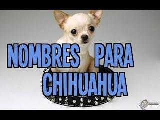 Los Nombres para perros de Chihuahua
