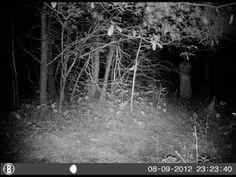 original terrifying ghost photo in night