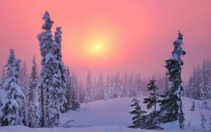Desktop HD Wallpaper Coniferous Forest Snowdrifts Fir Trees 300x188