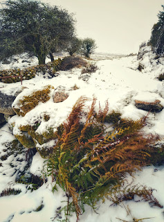 snow, Connemara, winter, ferns