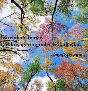 ağaçlar, allah, bitkiler alemi,  resimli mesajlar, resimli sözler, sanatkar, tomurcuk, yaratıcı, türkiyede yetişen ağaç türleri, ödev notları, ders notları, coğrafya ödevi ağaçlar, orman varlığımız
