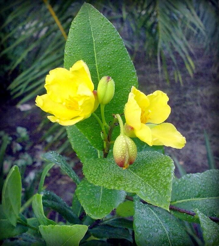 Keindahan Bunga Di Halaman