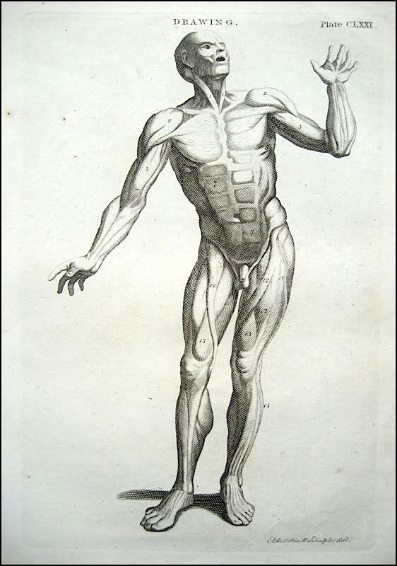 How To Draw The Muscles Of Human Body