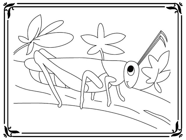coloring pages of a grasshopper