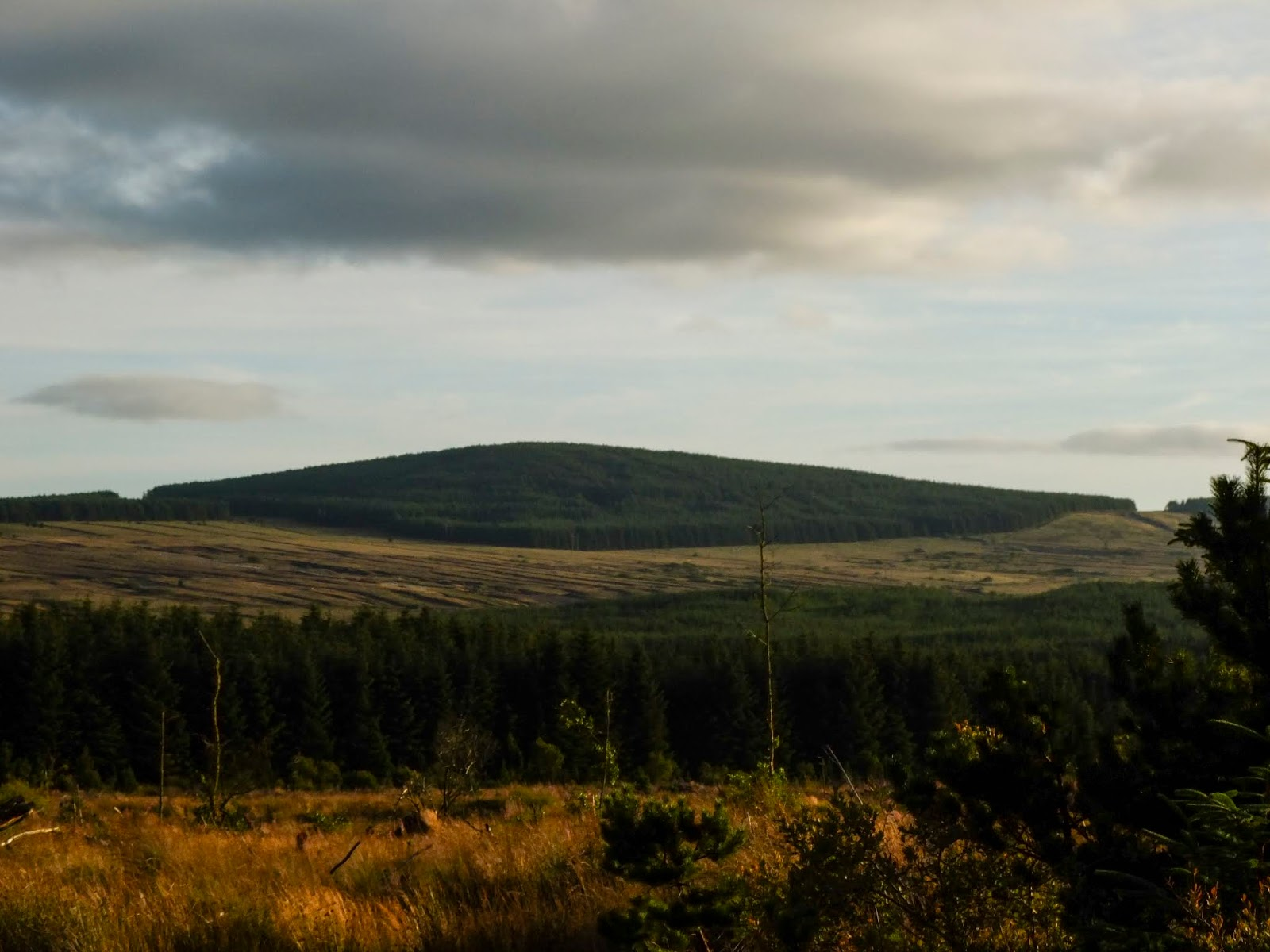 A forest covered mountain peak before sunset in North Cork.
