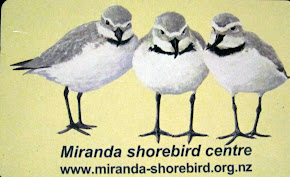 Miranda Shorebird Centre