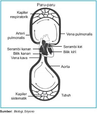 Gambar Campoer Adoek Anatomi Aves Gambar Sistem Reproduksi ...