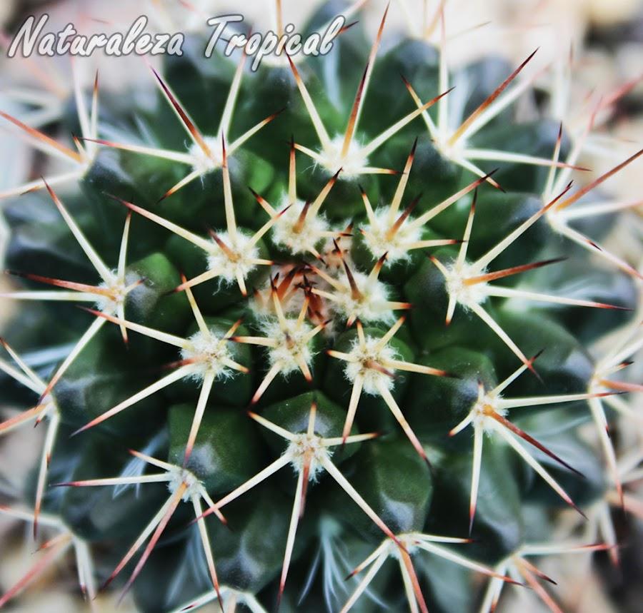 ¿Por qué debemos incorporar un cactus a nuestra casa o jardín?