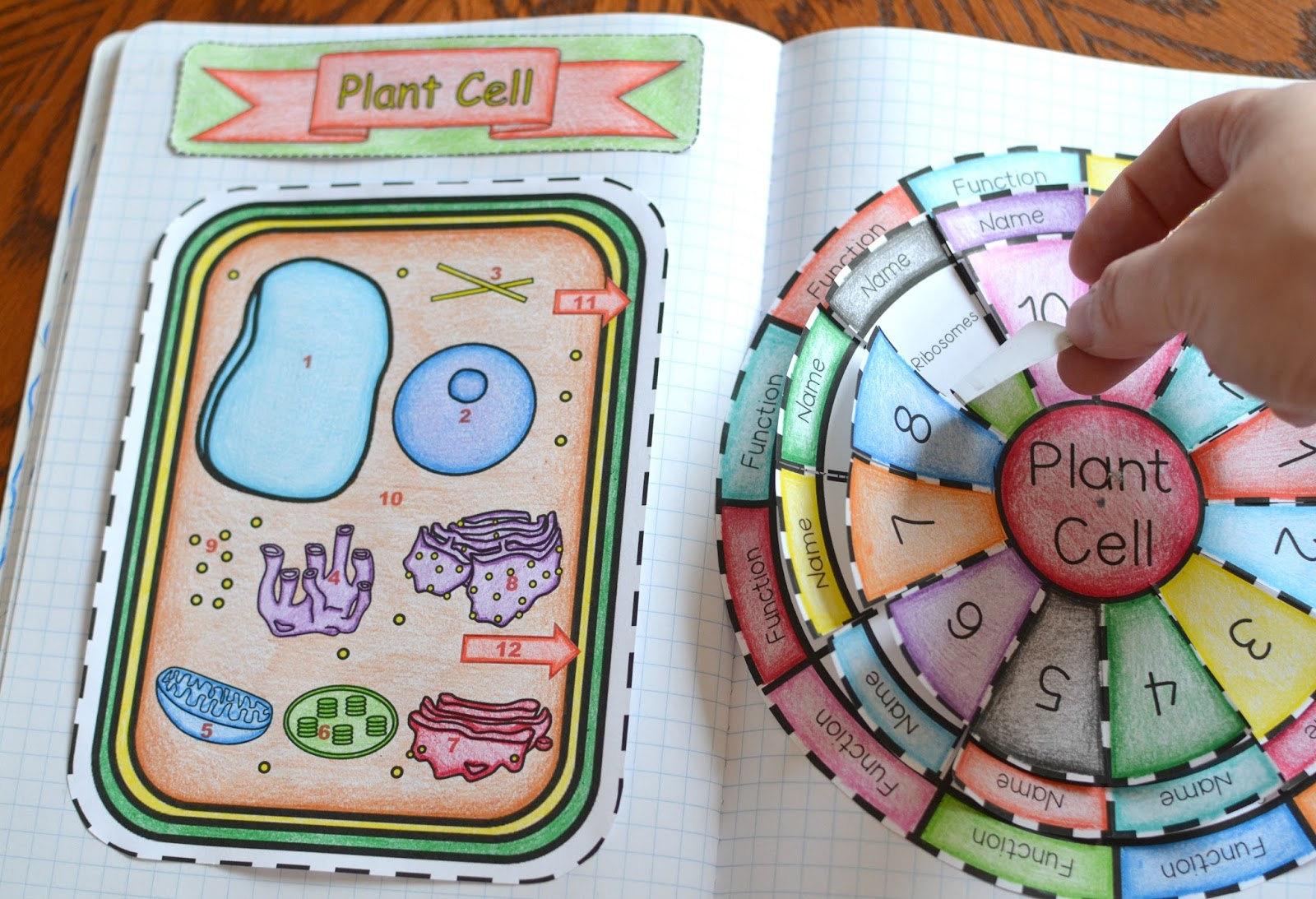 Animal and Plant Cell Foldables - photo#33