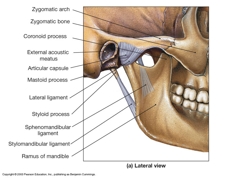 Anatomy Of The Temporomandibulartmj Joint Dentistry And Medicine