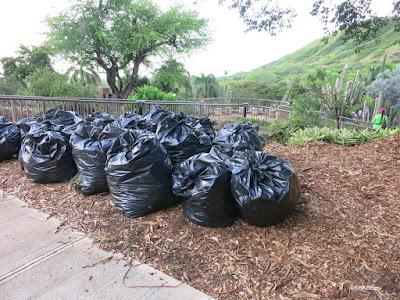 the results of weeding, Kapi'olani Community College, Oahu
