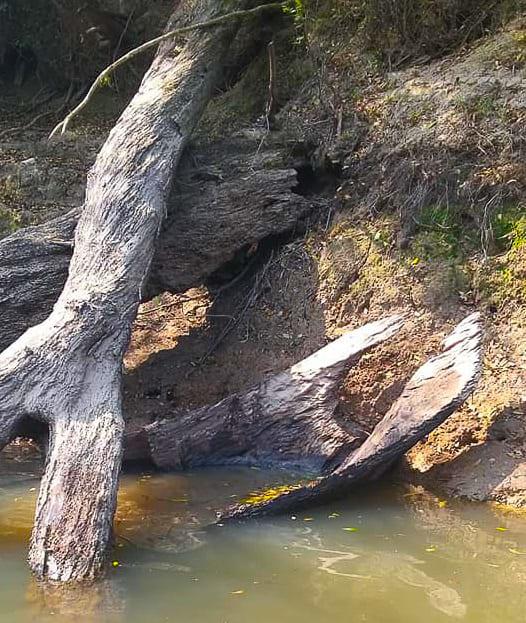 Canoa foi avistada com uma ponta para fora do leito  do Rio Canoinhas
