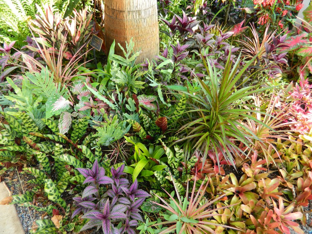Garden muses not another toronto gardening blog the - Botanical gardens naples florida ...