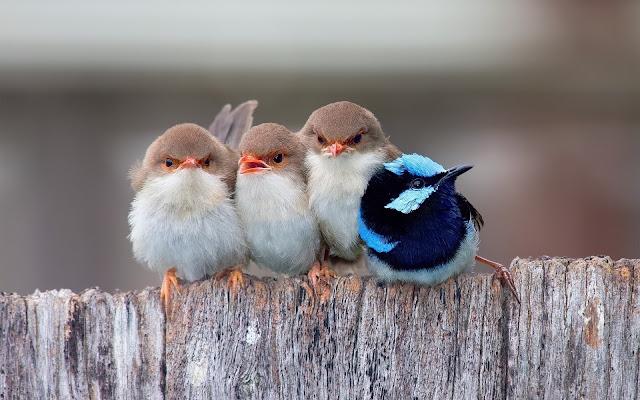 Foto-Foto hewan yang Super imut dan Menggemaskan