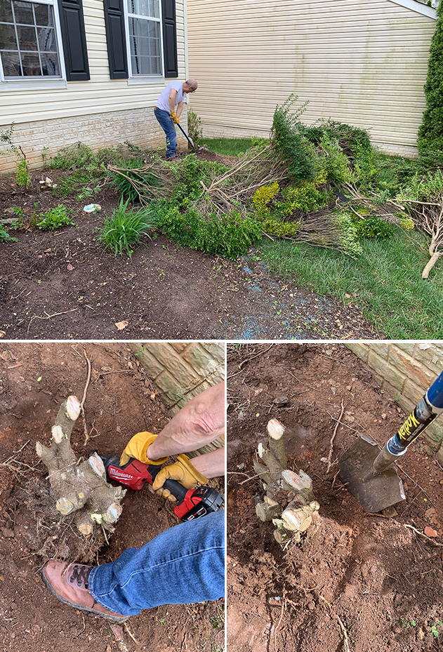 Using the Milwaukee sawzall and a shovel to dig out roots from bushes  #thdprospective