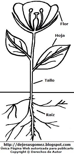 Dibujo de planta señalando sus partes para colorear pintar imprimir. Imagen de planta de Jesus Gómez