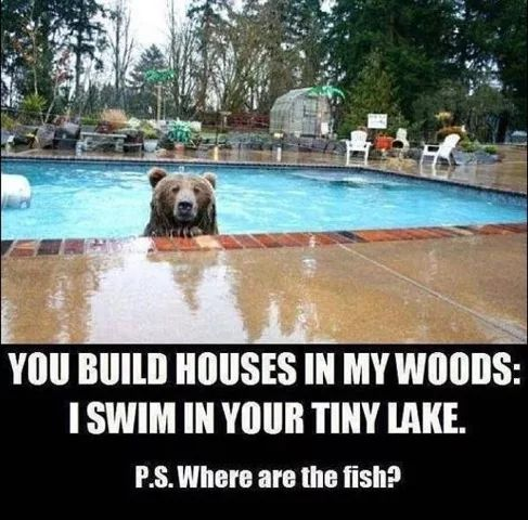 Good point Bear, good point... uhmm, just stay right there... Honey, where are the fish sticks? | Human encroachment into the Grizzly  Bear natural habitat has drastically reduced their population. #wildlife #endagered #bears #animals #grizzly
