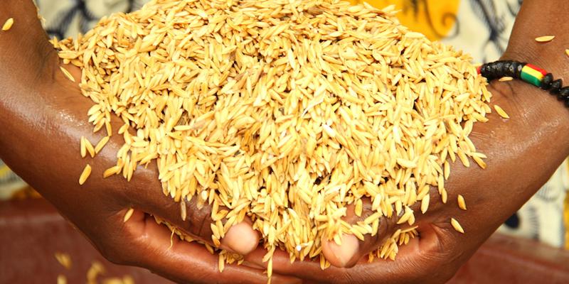 Étuvage du riz