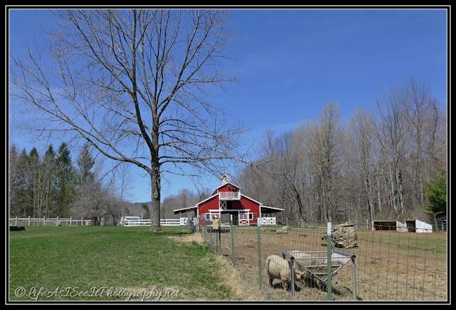 Shaftsbury VT Wing and A Prayer Farm