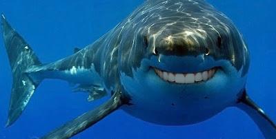 Sharks with human teeth - photo#31