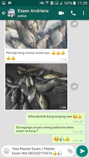 essen untuk umpan lumut ikan nila