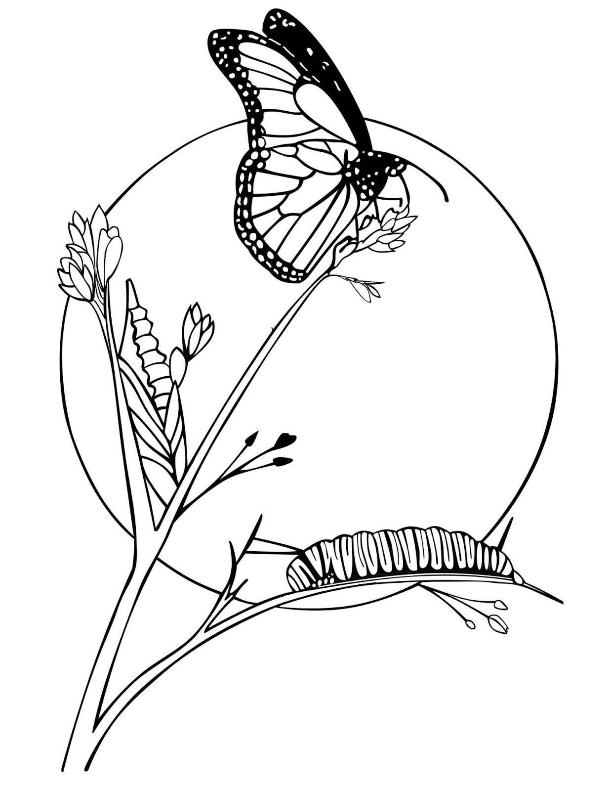 Sketsa Gambar Kupu Kupu Hinggap Di Bunga Sobsketsa