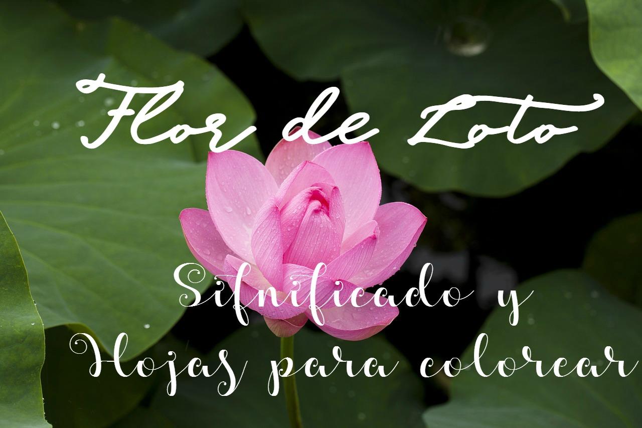 Reciclando Con Erika : Flor De Loto , Significado Y 4