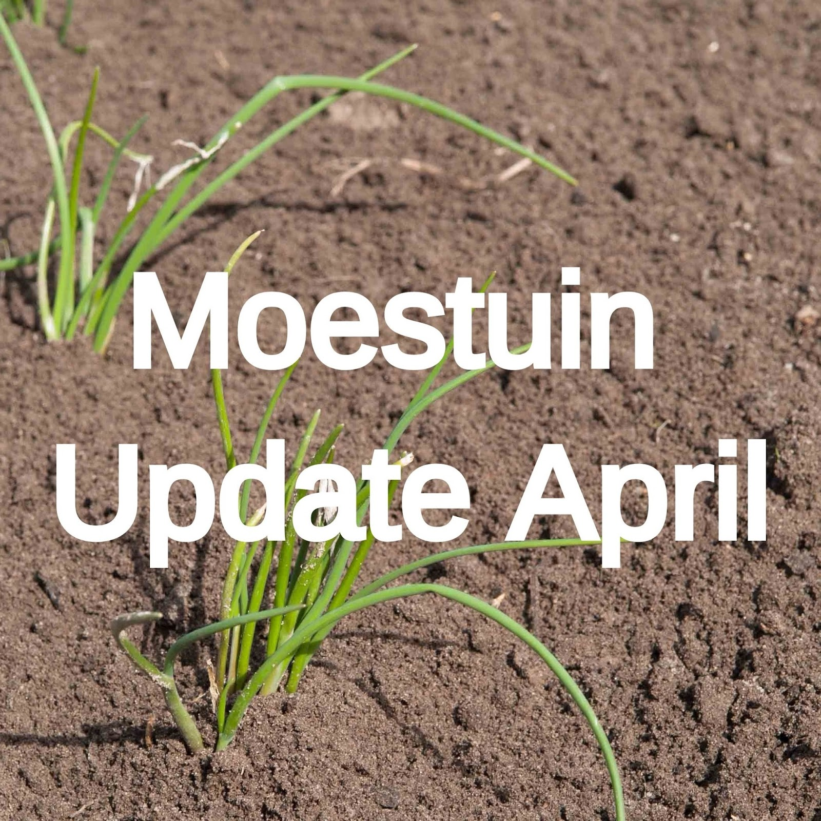 moestuin volkstuin update april