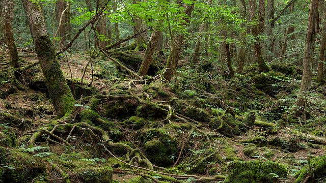 Alasan Aokigahara sering dijadikan tempat bunuh diri