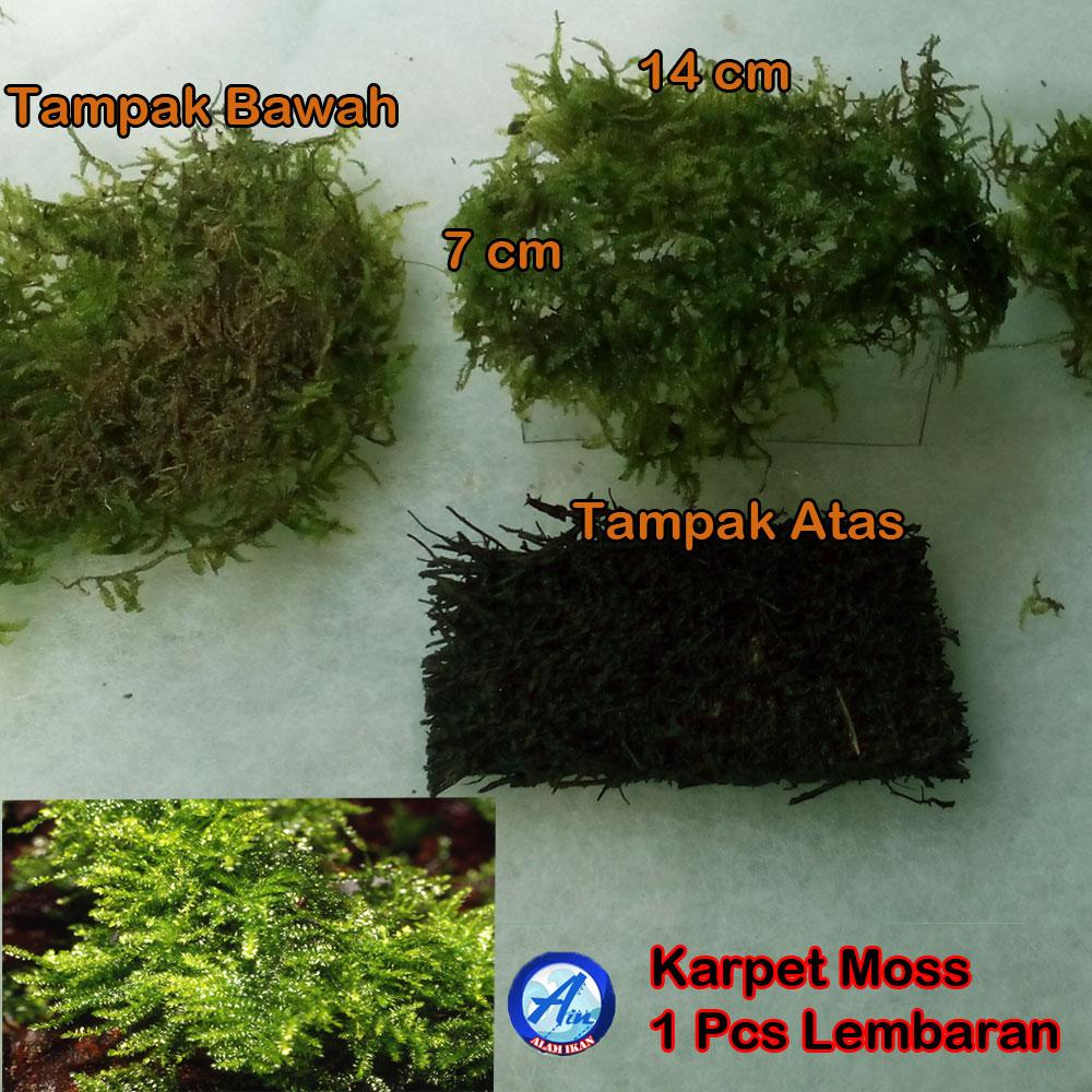 Alamikan Shop Fisiden Moss Lempeng Tanaman Air Aquascape Super Gambar Update 2017