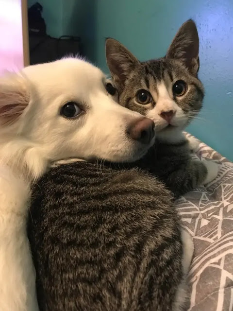 15 Pictures Of Dogs And Cats Being Best Friends That'll Make Your Eyes Leak