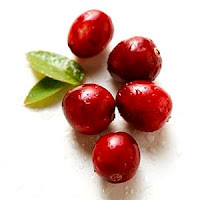 How Cranberry Juice Prevents Urinary Tract Infections