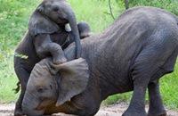 http://www.thoharianwarphd.com/2016/07/10-hewan-trebesar-di-dunia.html
