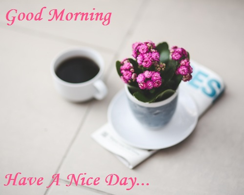 Good Morning Flower Image With Quotes