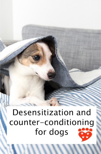 Desensitization and counter-conditioning for dogs. The poster shows a fearful Jack Russell hiding under a blanket