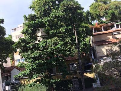 Árvore na Rua Maracás preocupa moradores