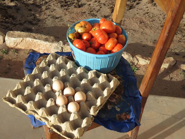 Winterproduktion, dazu kommen noch Petersilie sowie Salat im Gewächshaus