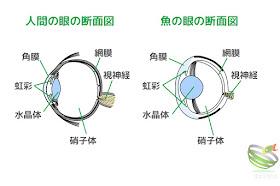 眼の断面図