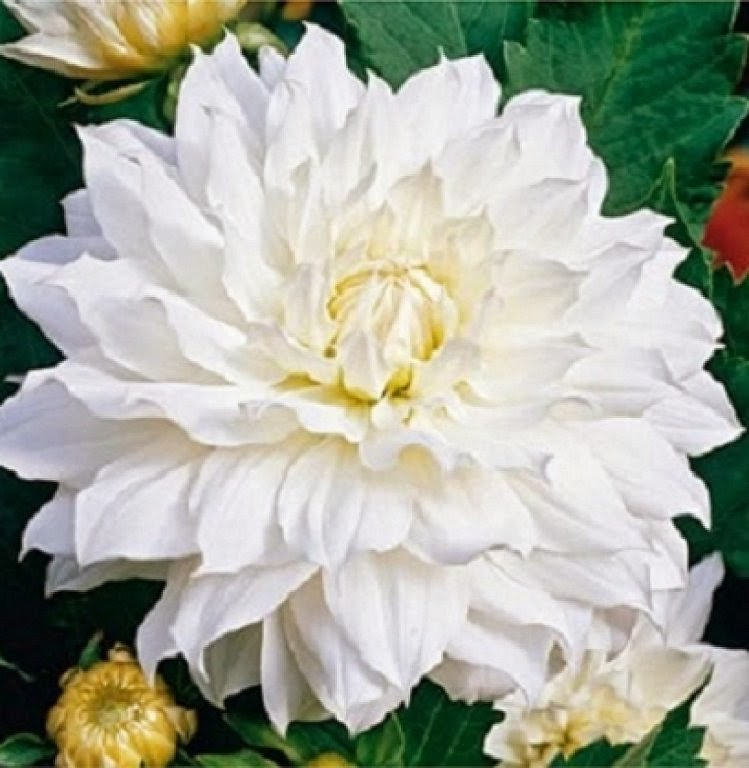 Imagenes de Amor, Flores Blancas, parte 3