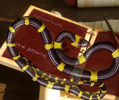 Schlangen bei Ovid: Die Kupplerin Dipsas