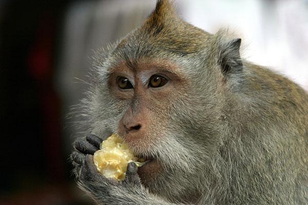 Ubud Sacred Monkey Forest - day trip to Ubud, Ubud map, palace