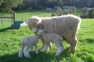Ιουλίου 2013 ~ Πρόβατα ASSAF b7400abb161