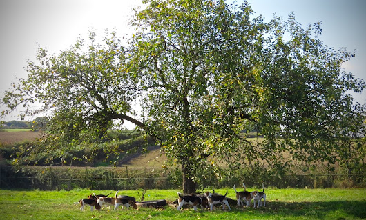 Autumn at the rehoming centre