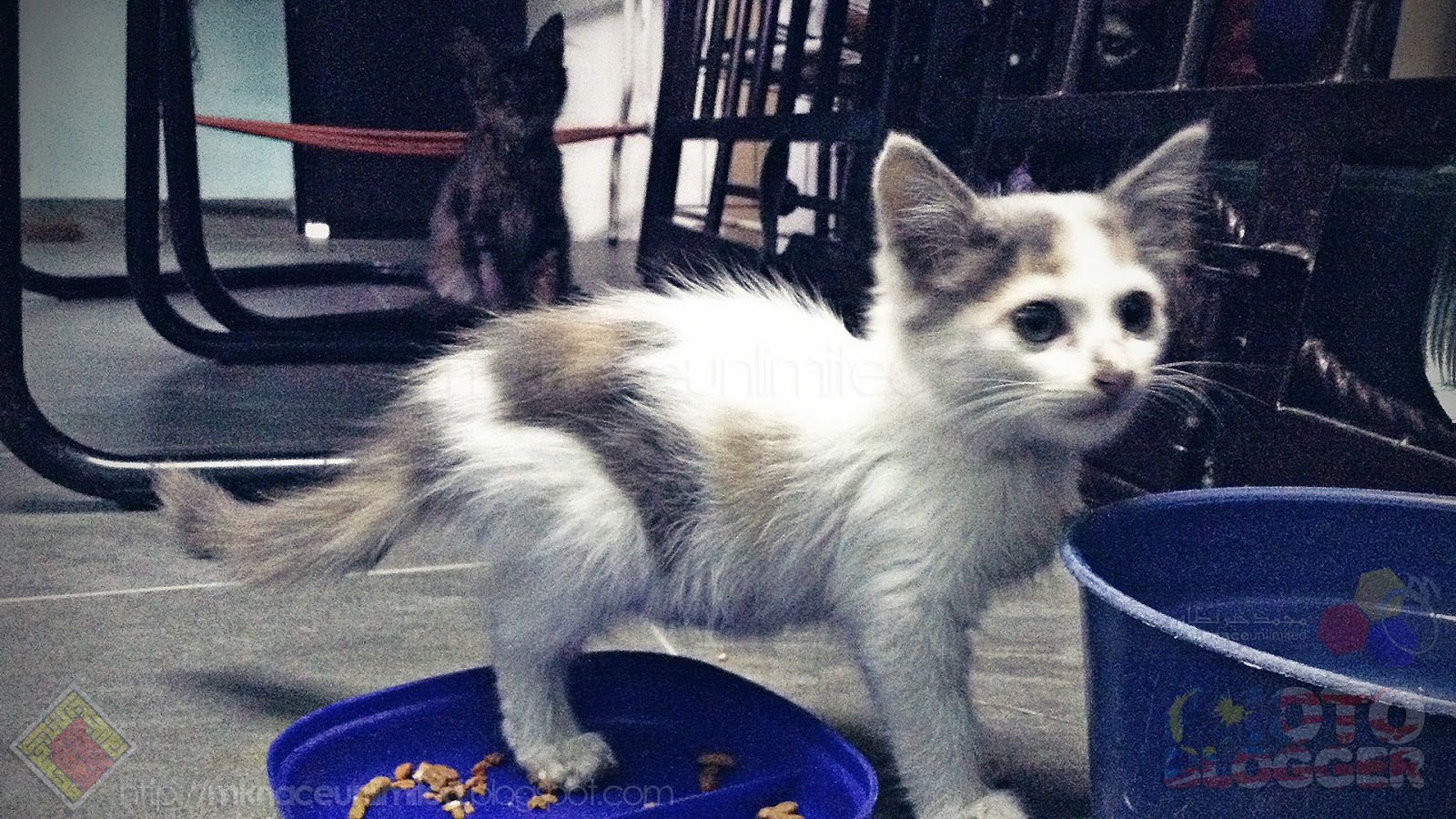 Snowzura 20180829 New Kitten Found Mknace Unlimited The Tcash Vaganza 32 Milo Malaysia Activ Go 2018 08 29 185132