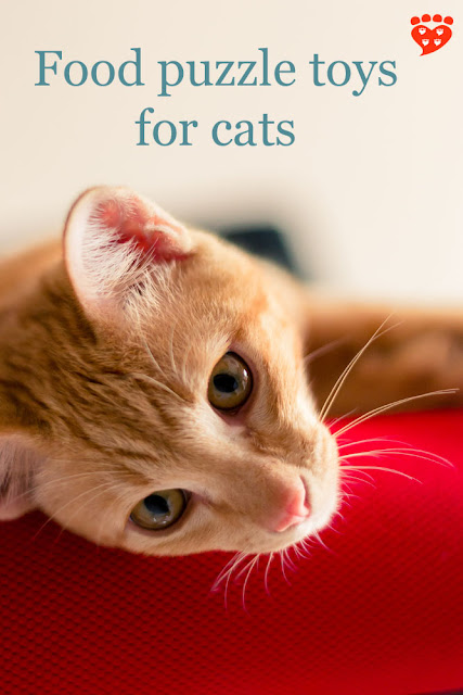 The benefits of food puzzle toys as enrichment for cats - this ginger cat is dreaming of them